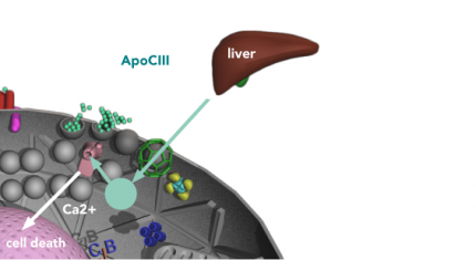 Apolipoprotein CIII (ApoCIII) is serum factor that is closely associated with both type 1 and type 2 diabetes. Both type 1 and type 2 have elevated levels of this lipoprotein