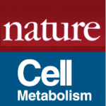 Liraglutide compromises pancreatic beta cell function in a humanized mouse model